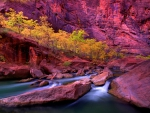 River in Canyonland