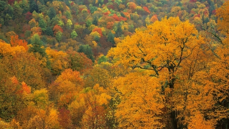 Autumn Forest - autumn, nature, forests, trees