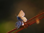 My friend the snail