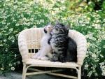 cute kittens in a flower garden