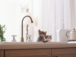 cute kittens in the kitchen