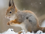 squirrel in snowfall