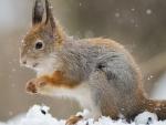 squirrel in snowfall