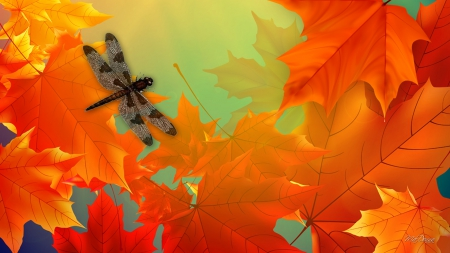 Maples and Dragonfly - orange, fall, leaves, autrumn, maple, dragonfly, bright