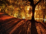 Penetrating Light in Autumn Forest