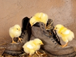 chicks with boots