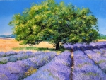 """Tree and Lavenders"""