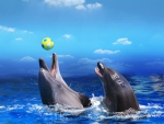 Playing  dolphin's