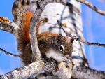 cute working squirrel