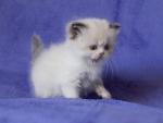 white cute fluffy