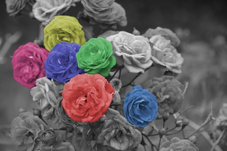 Monochrome Creations - colorful flowers, colorful, black and white flowers, Monochrome Creations, pretty flowers