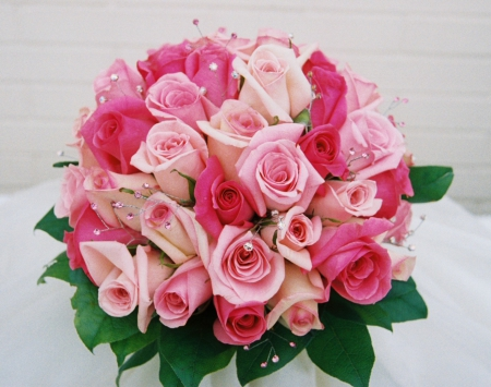 for you monarch from kate - beautiful, roses, pink, gorgeous