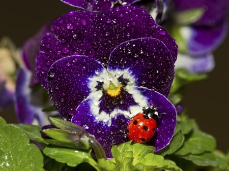 ♥ lovely pansy for my friend Andonia ♥ - flowers, freind, pansy, friendship