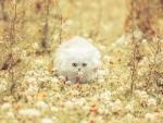 white fluffy in the fall garden