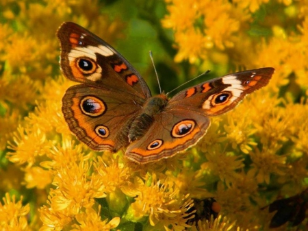 Butterfly in autumn colors - frumos, cooratl, un, fluture