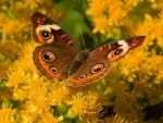 Butterfly in autumn colors