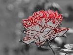 Artsy Rose