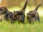 cute kittens in the garden