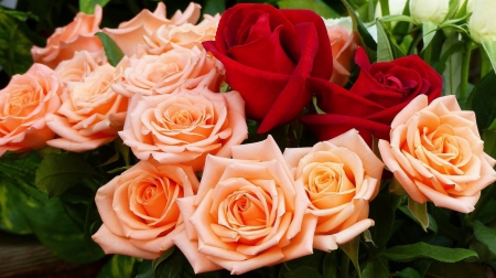 Roses - beautifull, yello, Red, roses