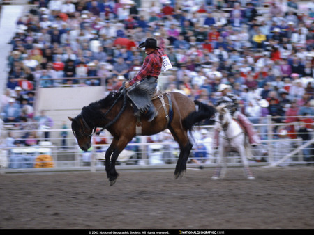 Rodeo - ridding horse, animals, horse, rodeo