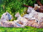 Family's White Tigers