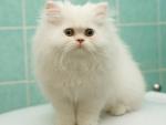 cute white fluffy