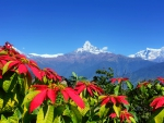 Lalupate flowers in high mountain