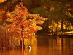 Ducks on Autumn Lake