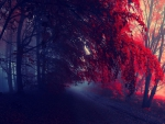 Foggy Red Autumn Forest