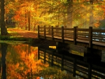 Wooden Bridge in Autumn Forest