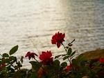Rosy Lake