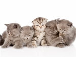 a lot of cute kittens