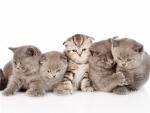 a lot of cute kittens