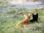 walking kittens