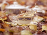 Splashy autumn tea