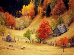 Idilic Autumn Scenery