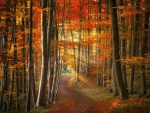 Winding Path in Autumn Forest