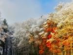 First Snow on Autumn Trees