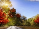 Road Leading to Autumn Forest