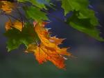 Peaceful Fall on Autumn