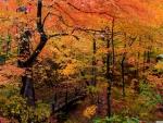 Autumn Park with Bridge and Walkway