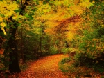 Golden Colors in the Woods