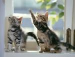 kittens on the window