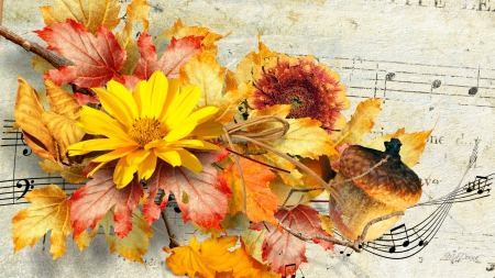 Music of Autumn - fall, autumn, music, nuts, leaves, sunflowers, flowers, paper, score