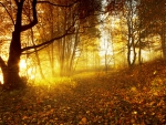 * Autumn *