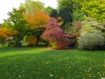 Lovely Autumn Trees in Park