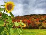 * Beautiful  autumn *