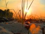 Grasses Under Sun