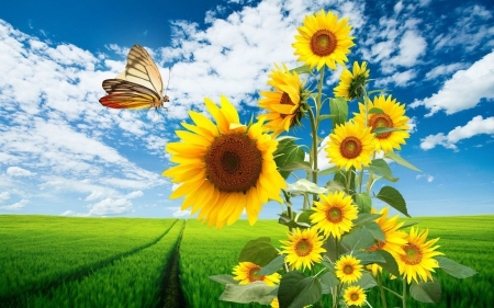 Sunflowers and Butterfly - butterflies, 3D and CG, sunflowers, field