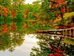 Pond Reflection in Autumn Forest